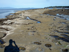 Intertidal Zone