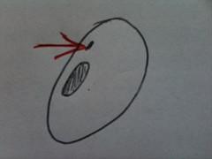Micropyle