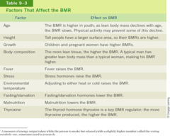 Factors that affect BMR
