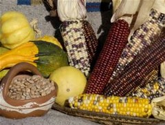 Corn and pumpkins