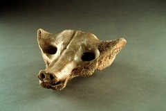 Title/ Designation: Camelid Sacrum in the shape of a canine Artist/Culture: Tequixquiac, Central Mexico Date of Creation: 14,000-7,000 BCE Materials: bone