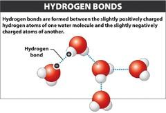 Define hydrogen bond
