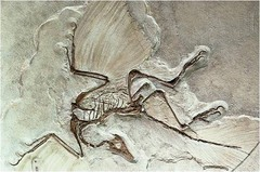 Importance of studying fossils