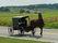 Essays on Amish