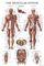 Essays on Anatomy