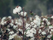 Cotton paper for dissertation
