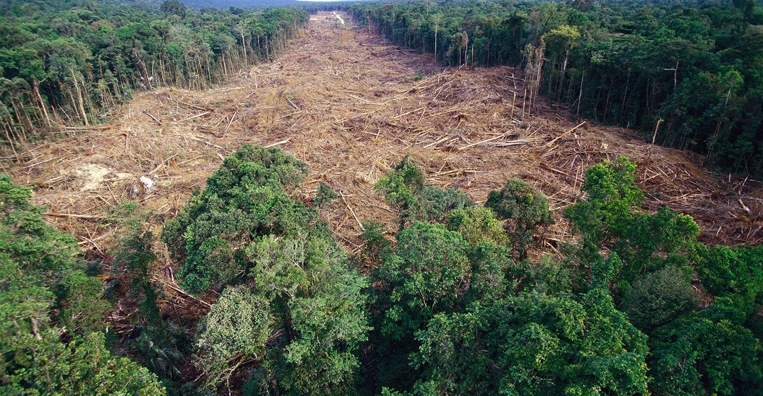 Essays on Deforestation