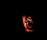 Essays on Vampires